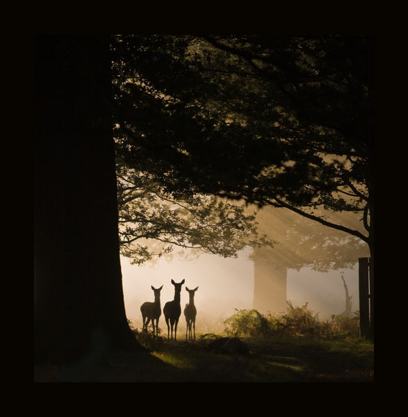Richmond Deer United Kingdom England Richmond by Mark Simms, as seen on linenandlavender.net Take me there. http://www.linenandlavender.net/p/blog-page_5.html