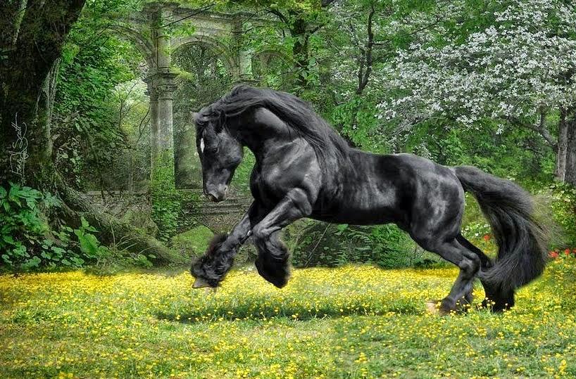fotos-de-caballos-con-pelaje-en-patas