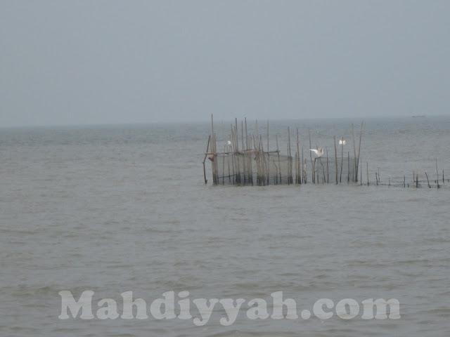 Pantai Mangrove, wisata sumatera utara, wisata pantai, burung pantai