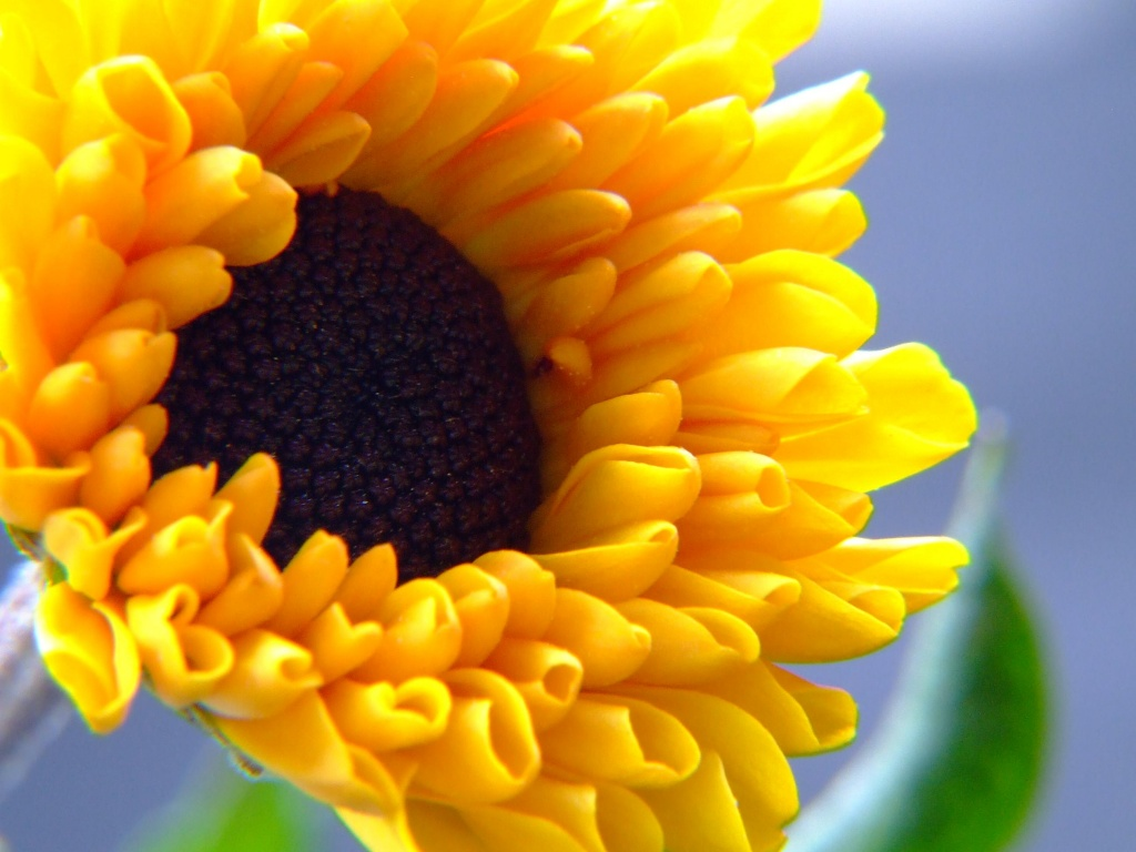 Beautiful Natural Flowers Wallpapers Beautiful Sun Flower Wallpaper