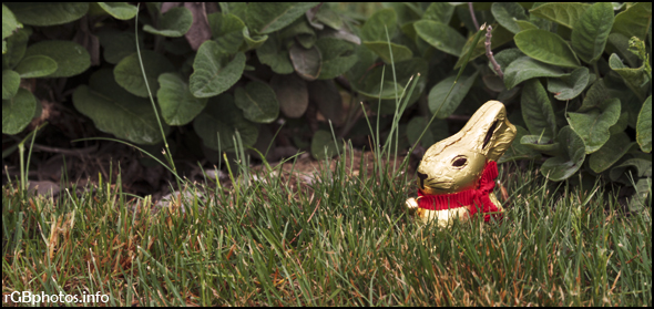 Fotografia di un Coniglietto Pasuquale di cioccolata nascosto nell'erba