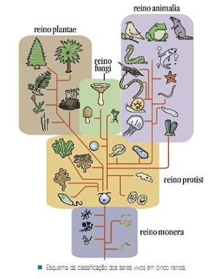 Os seres mais Abundantes na Biosfera