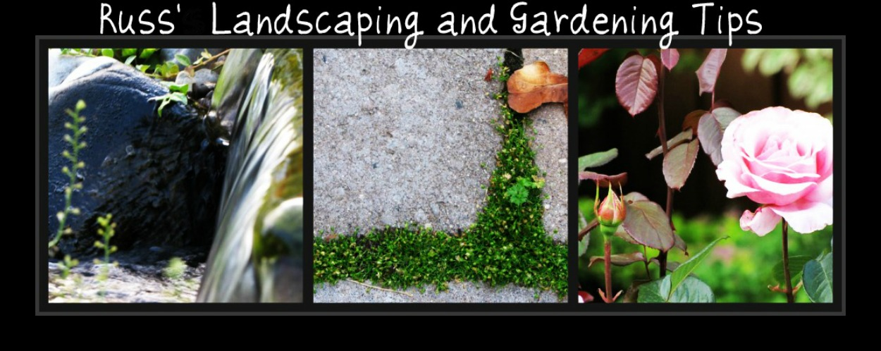 Russ' landscaping and gardening tips