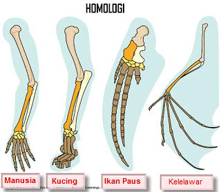 Homologi organ