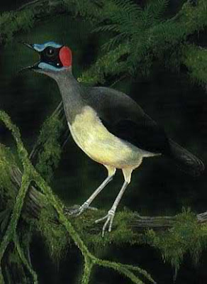 Grey Necked Rockfowl Bird Photos
