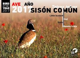 AVE DEL AÑO 2017 SEO/BirdLife