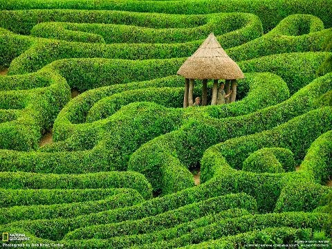 Laurel maze at Glendurgan Garden. Cornwall, England