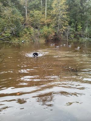 Jake the Dog retrieves birds