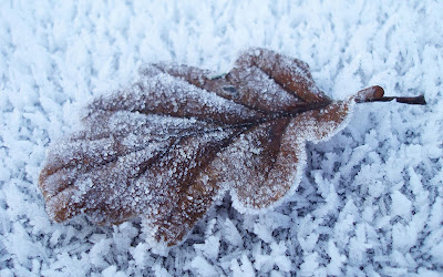 Leaf And Snow Wallpapers