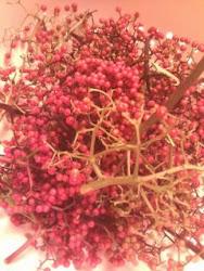 Wild Native Non Edible Elderberries