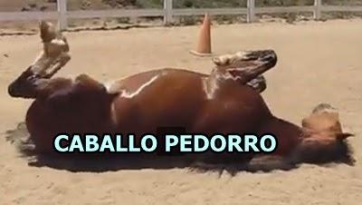 caballo-pedorro-flatulencias