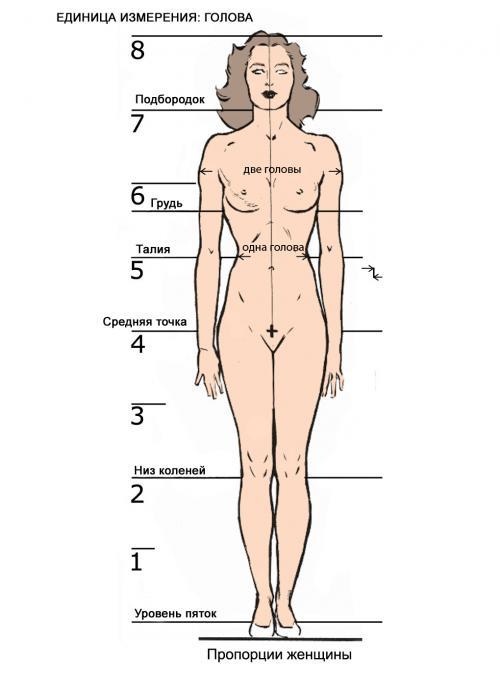 и пропорции женского тела
