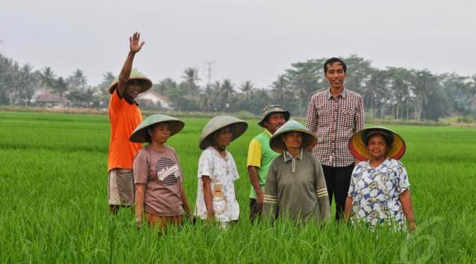 Jokowi di Sawah