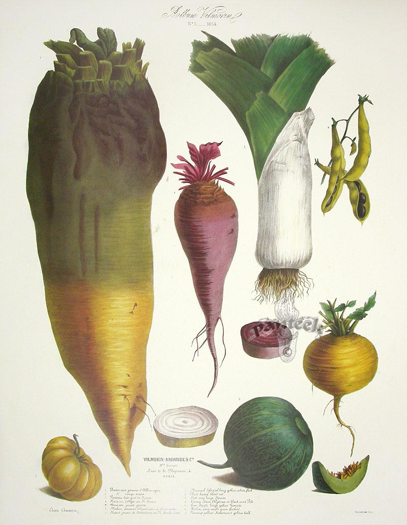 weird vegetables
