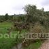 ΦΩΤΟ-Ανεμοστρόβιλος «σάρωσε» χωριά του δήμου Πύργου