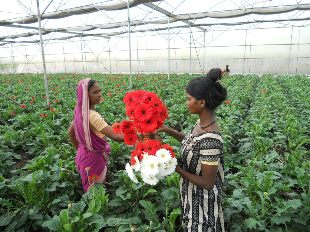 """India: """"Floriculture is a huge opportunity sector"""""""