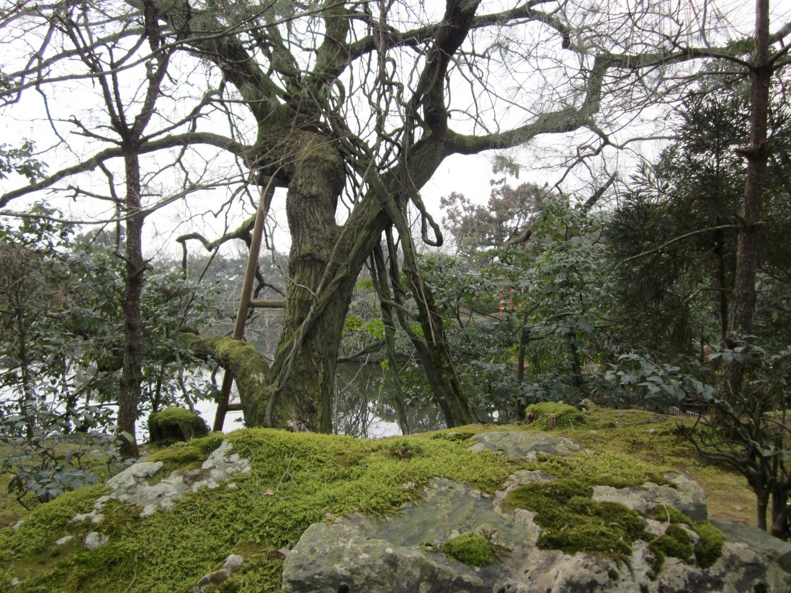 http://3.bp.blogspot.com/-yNikEEz4k3Y/TVSUGjVGQBI/AAAAAAAABs8/VdXL5yUgaok/s1600/kyoto+058.JPG