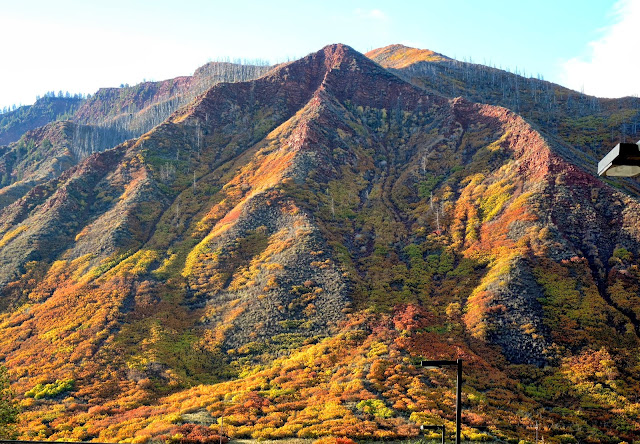 Autumnal palette in the Rocky Mountains.