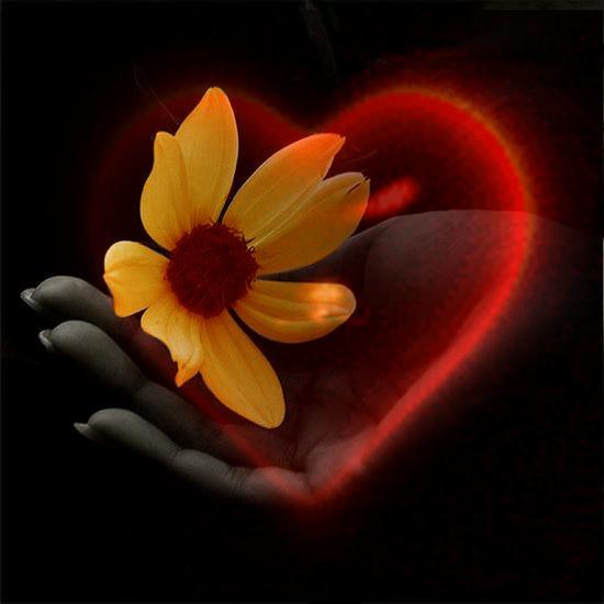 http://3.bp.blogspot.com/-yOAjCDJTMs0/TkJN_f0QCPI/AAAAAAAACB8/exGZCoxFpOg/s1600/main+coeur+fleur.png