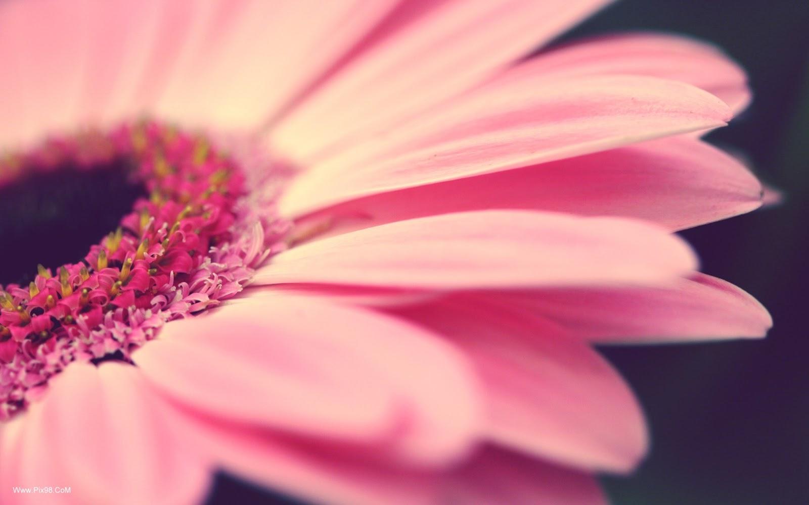 Flower Structure Flower