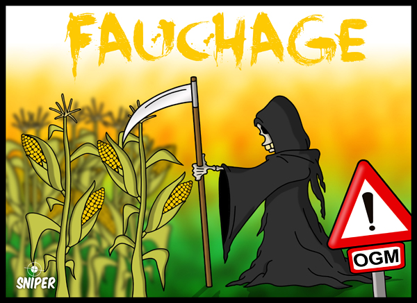  Quand MONSANTO fauche son mas !