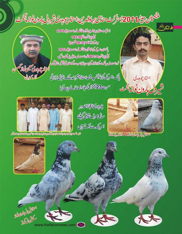 K Magazine Pigeon Pigeons Magazine ~ Pig...