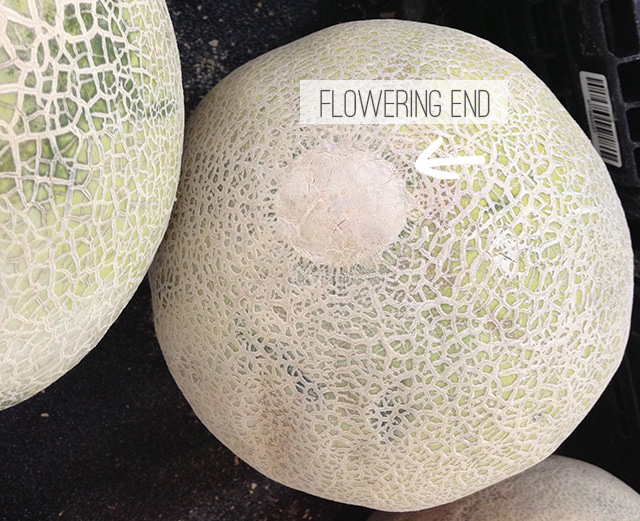 Smell the Flowering End of a Cantaloupe