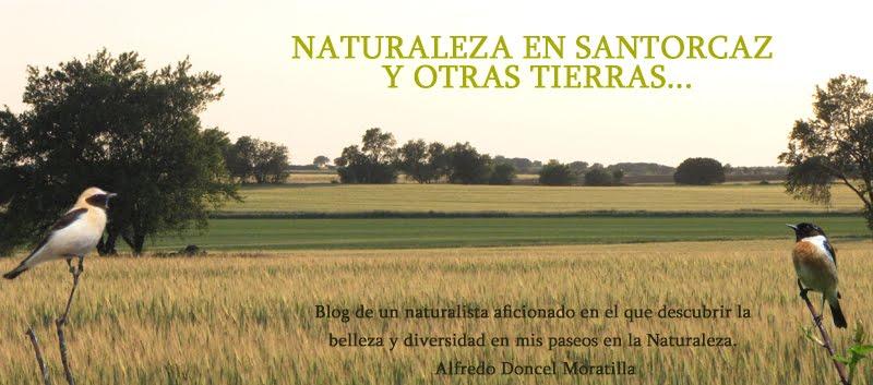 Naturaleza en Santorcaz y otras tierras...