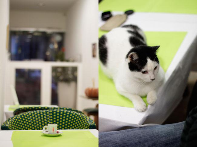 Nice cat's café