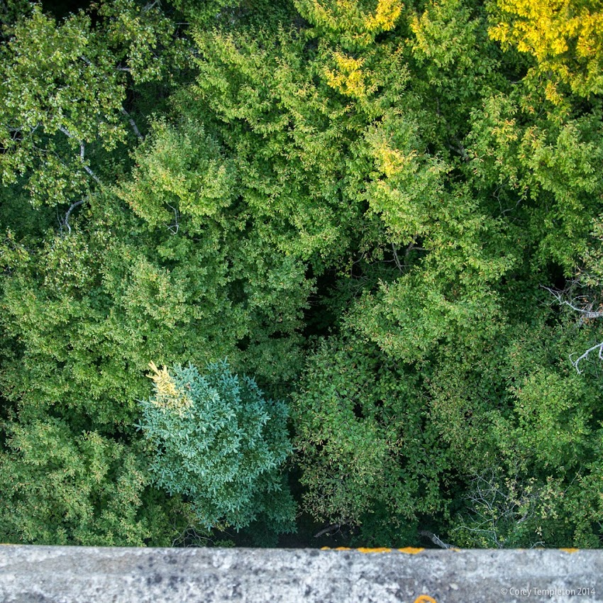 Jewell Island Portland, Maine in Casco Bay August 2014 Summer looking down on the forest photo by Corey Templeton