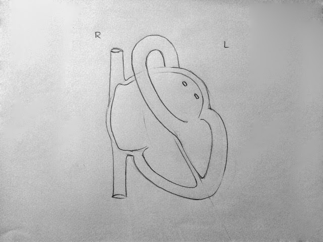 Draw it neat how to draw internal structure of human heart easy left ventricle wall should be comparatively thicker than right ccuart Gallery