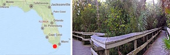 man fühlt sich auf einem Schlag der Natur verbunden die Wege bieten ausreichend Platz wenig Touristen Florida USA Everglades
