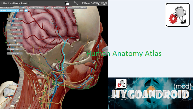 Download Free Top Android Apps Human Anatomy Atlas V5043 Apk