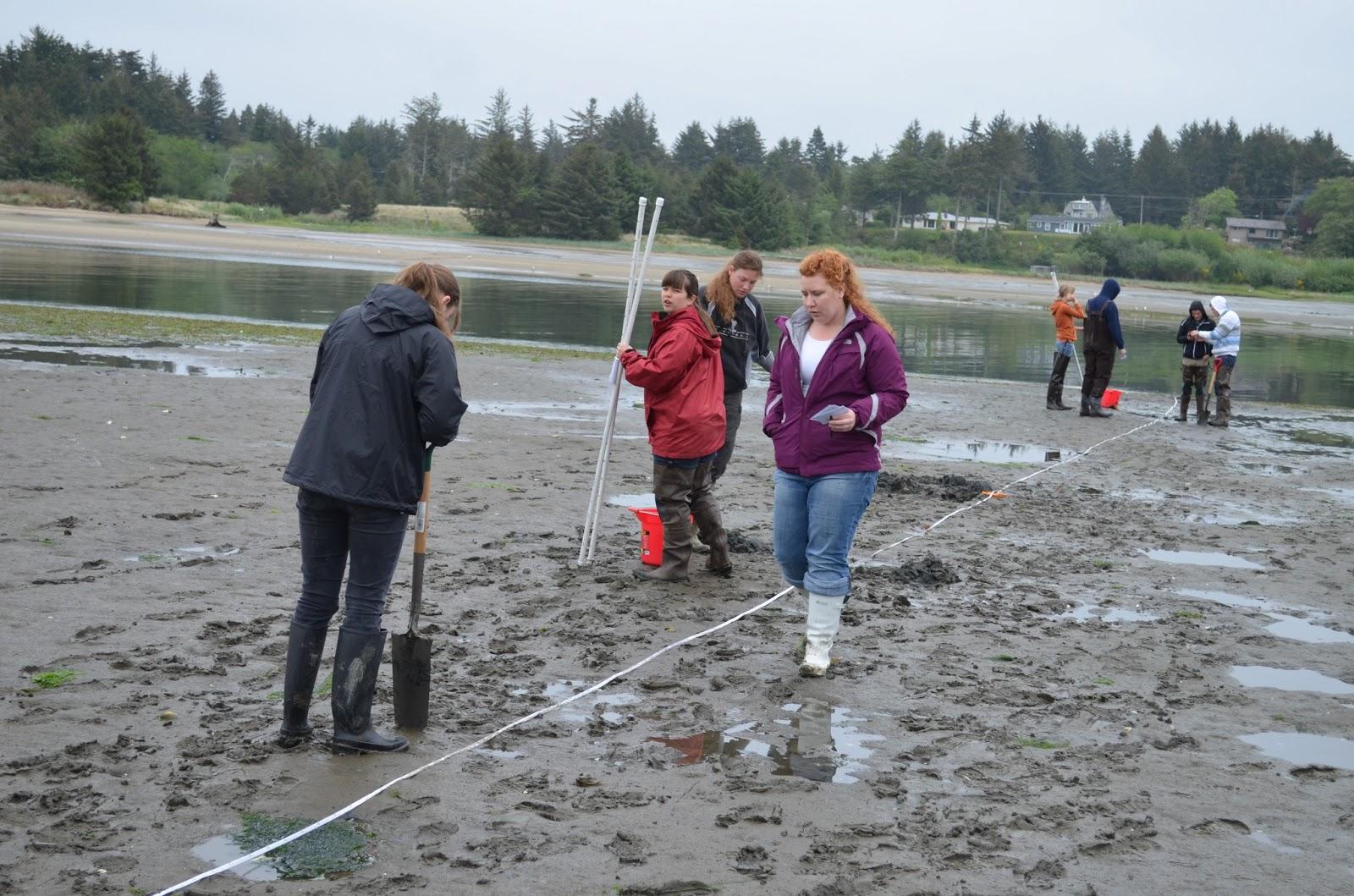Byu Idaho Marine Biology Field Experience Day 7 Mud In