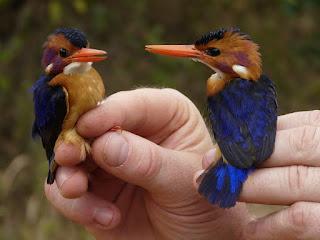 Burung Langka Dibunuh Menuai Kecaman Komunitas Ilmuwan-BANDAR CEME