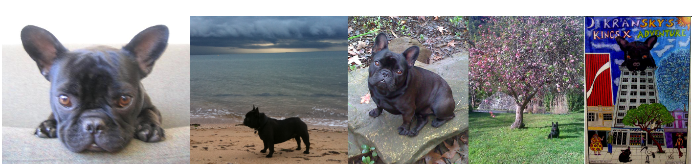 Kransky the French Bulldog