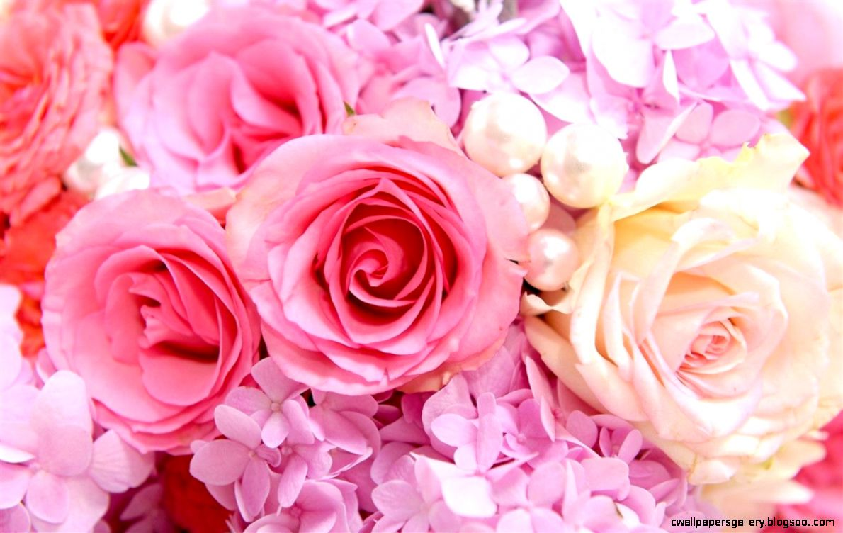 Pink Roses Backgrounds   Wallpaper Cave