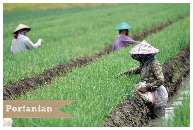Lomba Tagline Pertanian Ipb Pertanian