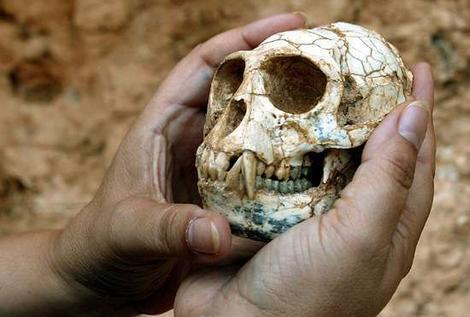 Το κρανίο μεσοπιθήκου που έζησε και στη Μαγνησία στο Μουσείο Φυσικής Ιστορίας Βόλου