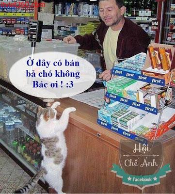 Những hình hài hước vui nhộn nhất, con mèo đáng yêu mua bả chó