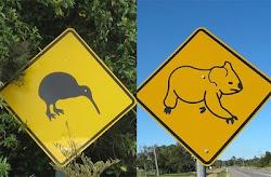 Kiwi & Koala