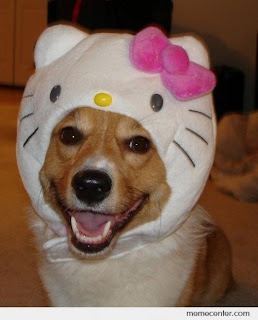 Dog in Hello Kitty costume