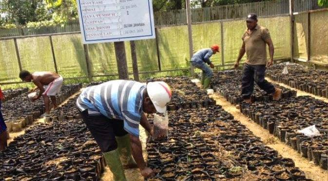 Petani Coklat  Papua Mulai Bangkit dan Siap Bersaing
