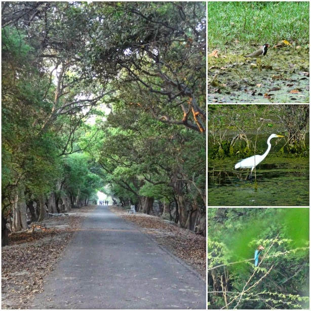keoladeo alle centrale velo parc oiseau oiseaux inde visite