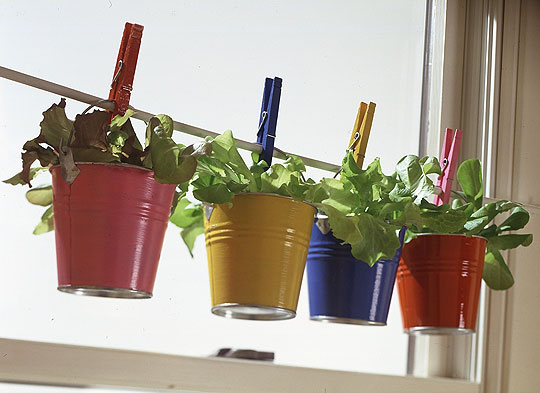 10 ideias para cultivar suas próprias ervas em casa