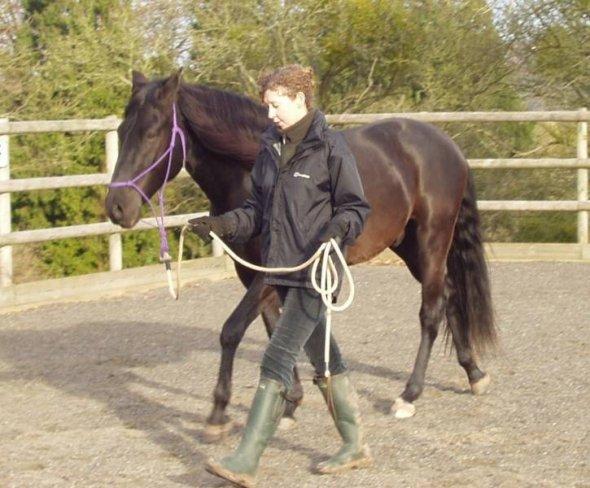 How to Put a Lead Rope on a Horse How to Put a Lead Rope on a Horse new photo