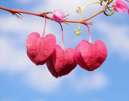 Valentine Wedding Decorations