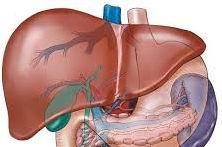 liver, hati