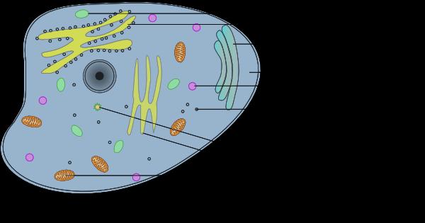 Animal cell essay