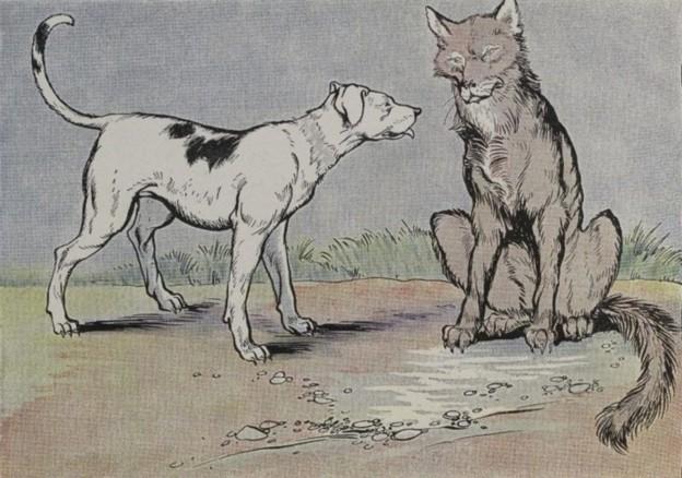 Dog Run At Arthur Pack Park